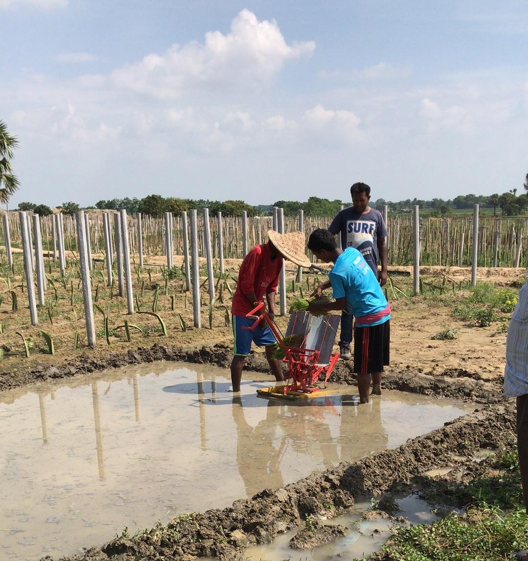 2 rows manual rice transplanter